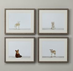 Baby Animal Portraits | 179.00 each | 16x13 ea. | Restoration Hardware Baby & Child | bear\lamb\tiger\zebu | item#103414.