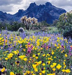 Organ Pipe Cactus National Monument in southern Arizona, USA