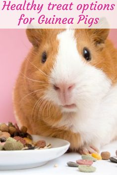 Guinea pigs are fun little creatures that make great pets. Their high intelligence levels pair perfectly with their adorable tiny faces. The truth is: Such cute pets can be given the best names. And what's even better is that guinea Emotional Support Animal, Healthy Treats, Guinea Pigs, Pugs, Creatures, Learning, Animals, Animales, Animaux