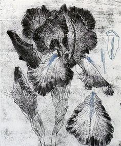 Elizabeth Blackadder etching - Blue Iris - 1992