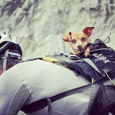 This pup gave a Tour de France cyclist some extra encouragement as they raced toward the finish line in Risoul. Cycling Holiday, Holiday Travel, Little Dogs, Four Legged, Mountain Biking, Riding Helmets, Road Trip, Tours, Bike