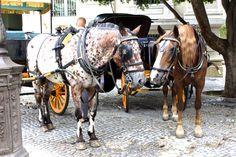 Cavalos em Sevilha