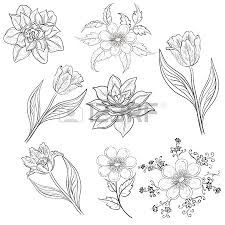Outline Flowers Pictures