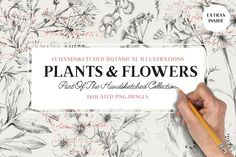 13 Botanical Illustrations & Extras by Vector Hut on @Graphicsauthor