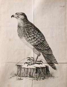 Vermischte Abhandlungen aus der Thiergeschichte / - Biodiversity Heritage Library