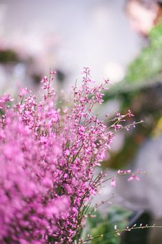 Purples, lavenders and lilacs