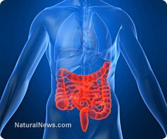 ♥Healthy gut bacteria help body regrow intestinal cells♥ Natural gut bacteria is also necessary to repair and maintain a healthy intestinal cellular system and that gut microbes are fully capable of regrowing damaged or compromised tissue.  Learn more: http://www.naturalnews.com/042726_healthy_gut_bacteria_intestinal_cells_probiotics.html#ixzz2jOsmBxiy