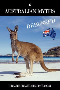 6 common myths about Australia debunked - is a koala really a bear? How many men are called Bruce? And does a boomerang always come back? Just some of the common myths about Australia examined in my post! Brisbane, Sydney, Melbourne, Australia Travel Guide, Visit Australia, Western Australia, Australia Holidays, South Australia, Travel Advice