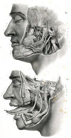 Google Image Result for http://25.media.tumblr.com/tumblr_m7rnczchiq1r2sk9go1_500.jpg