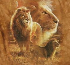 Make It Happen Mada: You're a Lion, and you're meant to WIN! Lion Images, Lion Pictures, Animal Pictures, Judah And The Lion, Lion And Lamb, Beautiful Lion, Animals Beautiful, Numero D Art, Big Cats Art