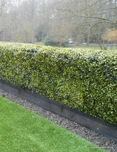 Another shot of the artificial box hedge we designed and installed on this mansion roof terrace.