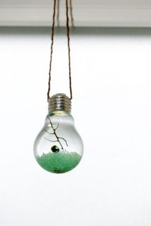 Marimo moss ball terrarium in a real light bulb The terrarium also includes a white shell, blue beads, and a sea fan Any questions, please feel free to contact me. Marimo Moss Ball Terrarium, Hanging Terrarium, Terrarium Diy, Ball Lights, Blue Beads, Light Bulb, Glass Vase, Arts And Crafts, Shell