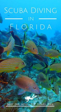 Discover the best dive sites and the top travel tips to go diving in Florida for your next scuba diving trip Snorkelling, Florida Keys, Underwater Photography, Ocean Life, Marine Life, Scuba Diving, Travel Tips, Around The Worlds, Adventure