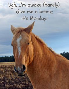 Ugh, Monday! by Montana Horse Trailers
