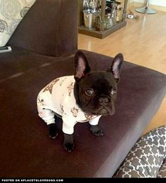 Judgey In His Jammies • from APlaceToLoveDogs.com • dog dogs puppy puppies cute doggy doggies adorable funny fun silly photography Limited Edition French Bulldog Tee http://teespring.com/lovefrenchbulldogs