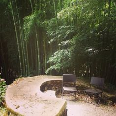 Quiet place!  #bamboo