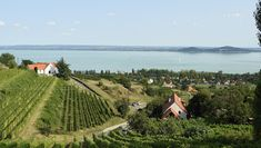Úti célok a következő helyen: Magyarország Vineyard, Outdoor, Outdoors, Vine Yard, Vineyard Vines, Outdoor Games, The Great Outdoors