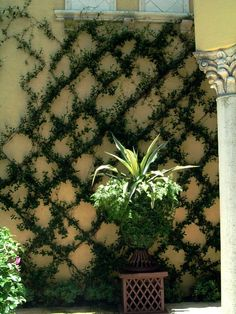 Trellis on wire, ivy cover, amazing idea!