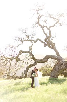 We Heart Photography | Holman Ranch Outdoor Wedding {{That tree is amazeballs}}