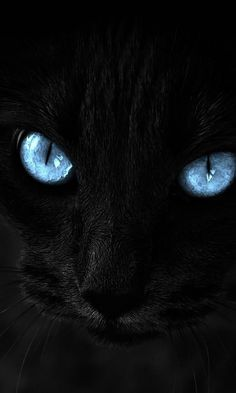 black cat with georgous blue eyes Pretty Cats, Beautiful Cats, Animals Beautiful, Animals And Pets, Funny Animals, Cute Animals, Kittens Cutest, Cats And Kittens, Chat Maine Coon