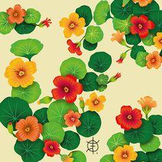 """Mais uma estampa da minha """"Coleção PANCs"""". Resolvi registrar em forma de arte essas plantinhas que são extremamente saborosas e nutritivas. Chegou a vez das Capuchinhas (Tropaeolum majus) que são flores comestíveis, com sabor fresco e picante, semelhante ao do agrião. As folhas e flores são consumidas em forma de saladas. #pancs #ilustração #illustration #estampa #design #designdesuperfícies #capuchinha #patterndesign #textiledesign"""