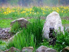 spring in gaja garden, poland