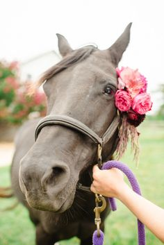 Awe! Cute horse with kind eyes and pink roses on his halter. He is so sweet!