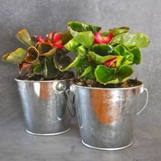 Make a pretty planter for only $1.50, including the plant!  So easy!