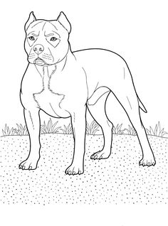 10 Best Dog Coloring Page Images Dog Coloring Page Coloring