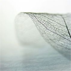I love this. It shows the leaf as a delicate thing. It shows the growth/structure of it.