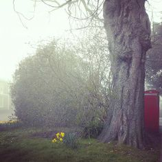 Chichester in the mist Chichester West Sussex, Mists, Plants, Flora, Plant, Planets
