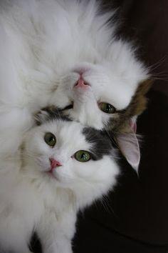 Double Decker Cats