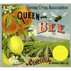 Corona, Riverside County Queen Bee Orange Citrus Fruit Crate Box Label Art Print