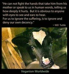 """... For us to ignore the suffering is to ignore and deny our own decency."" (Dr. Will Tuttle)"