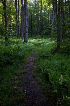 Spring Morning Hiking Trail