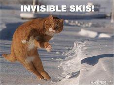 Skiing Cat