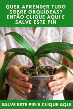 Orquideas Cymbidium, Orchids, Costa, The Good Place, Manual, Garden, Outdoor Decor, Photography, Jewelry