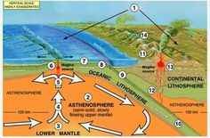 1. There are two basic types of LITHOSPHERE: continental and oceanic. CONTINENTAL lithosphere has a low density because it is made of relat...