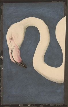WATERCOLOUR - Though often neclected the sketches for Natural History Prints are often stronger and more interesting then the final result. . This Flamingo beauty is often presented as done by Edward Lear for John Goulds bird books in the mid 1830's. But, as it turns out, it's probably by Louis Agassiz Fuertes, done almost a century later.
