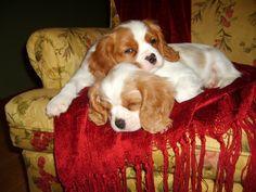 Mylo and Otis