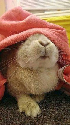 Rabbit Peek a boo! Cute Baby Bunnies, Funny Bunnies, Cute Baby Animals, Animals And Pets, Funny Animals, Cute Babies, Hamsters, Amor Animal, Fluffy Bunny