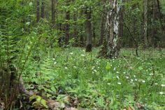 Die Raumfee: Heimatwald