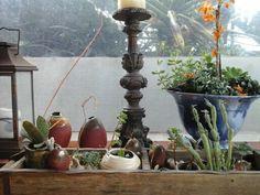 Ceramica e plantas