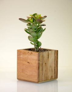 Geometric Wood Planter, Mini Succulent Planter, Modern Indoor ...