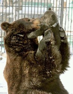 Bears! Oh My!