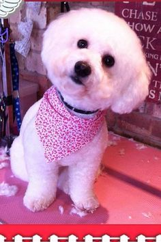 The 19 Best Grooming Images On Pinterest Dog Clippers Dog
