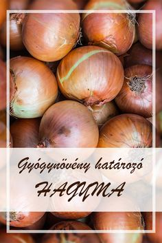 Health 2020, Allium, Onion, Spices, Herbs, Vegetables, Healthy, Nature, Food