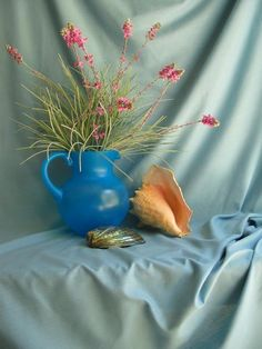 still life shell blue