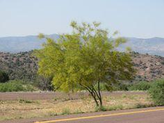 Mogollon Rim, Payson, Arizona