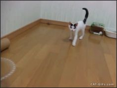 "CAT GIF • BOOM! Ninja Kitten attacks. He strikes again. ""I said NO papurrazzi here!"""